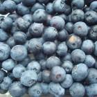 Obst und Beeren